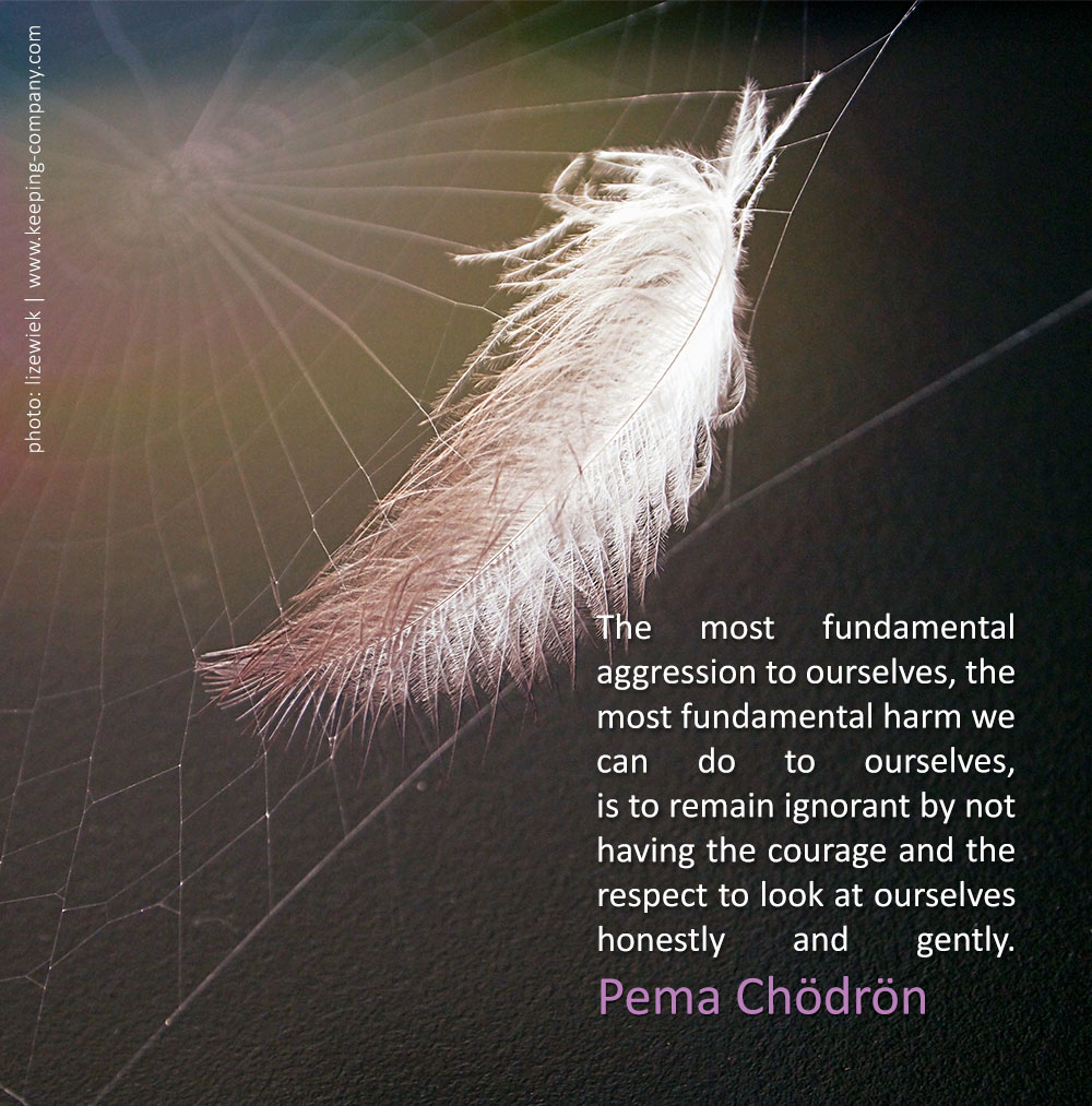 Pema Chodron Quotes Awesome Pema Chodron  Keeping Company