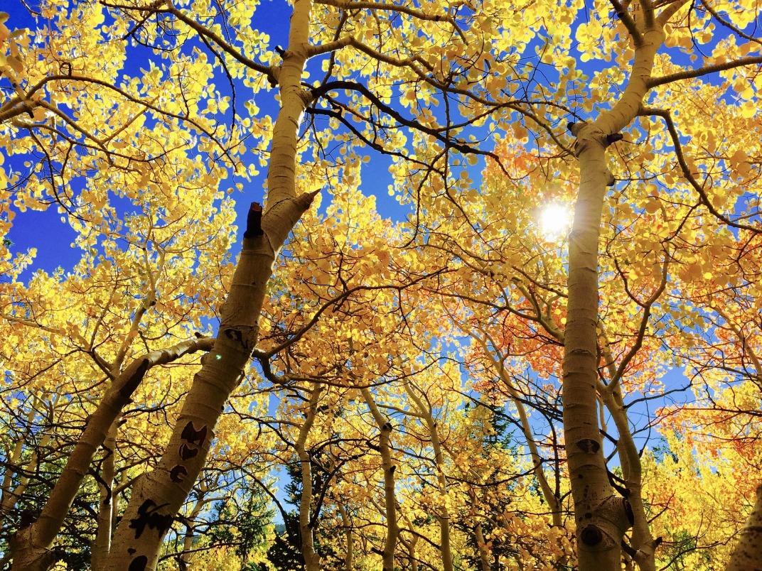 leaves-1363766_1920.jpg